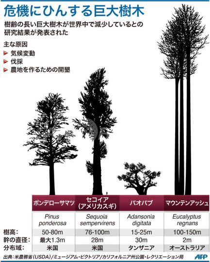 死にゆく世界の巨大樹木、野生生物の「揺りかご」に危機 豪米研究
