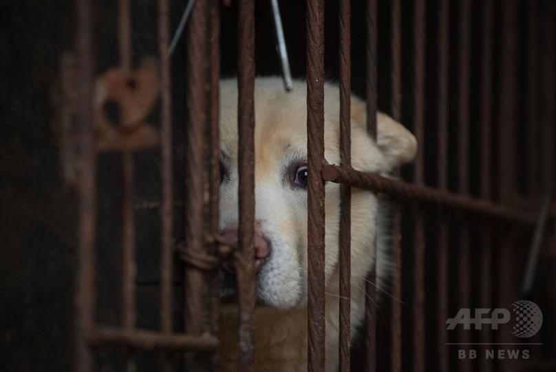 「死にゆくビジネス」 衰退する犬肉産業と転業への希望 韓国
