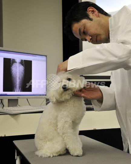 ペット診療情報をクラウド上で一元管理、富士通が実証実験開始