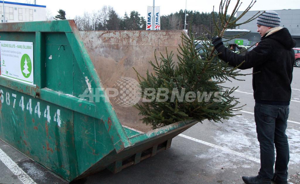 クリスマスツリーをバイオ燃料に、リトアニア企業が再利用の取り組み