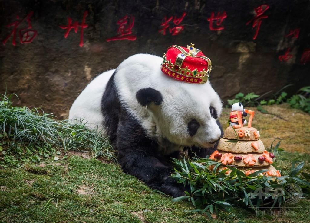 世界最高齢のパンダ、37歳に 中国