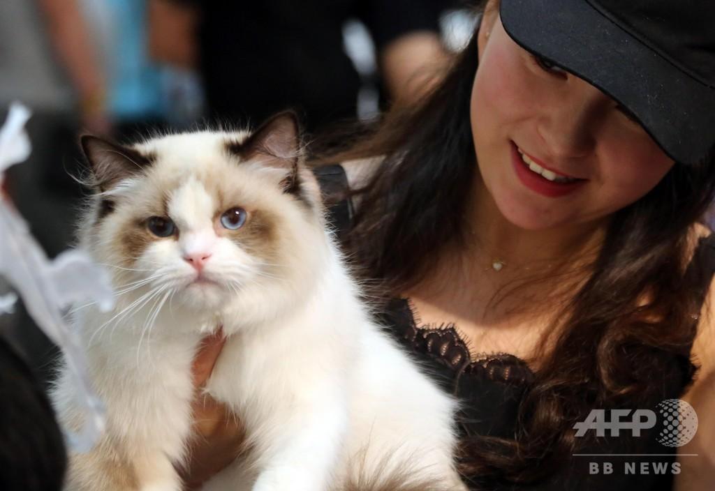 ペット関連商品、犬派も猫派も年平均支出は8万円超 中国