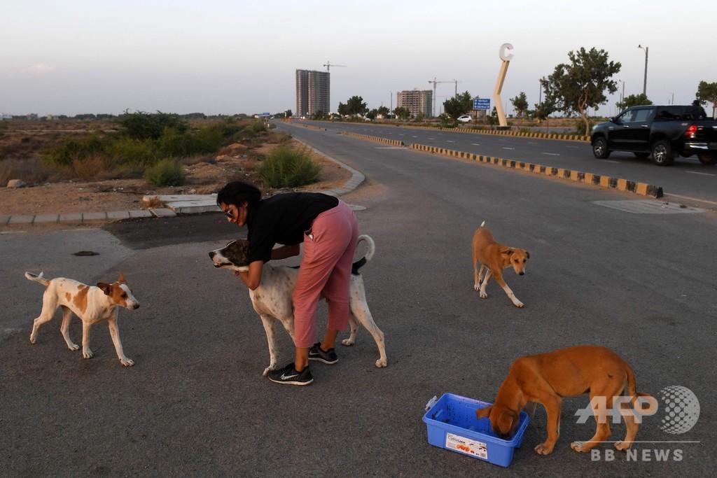 犬や猫たち数百匹死ぬ、新型コロナで閉鎖のペット市場で パキスタン