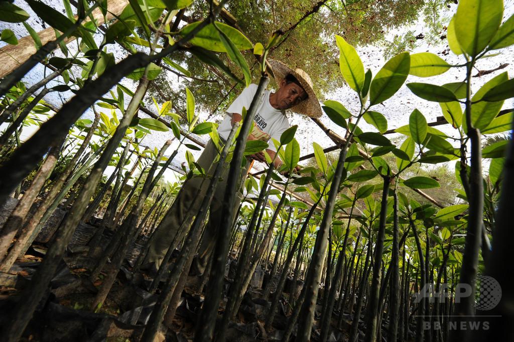 フィリピン、植林の世界記録更新か 1時間に約320万本