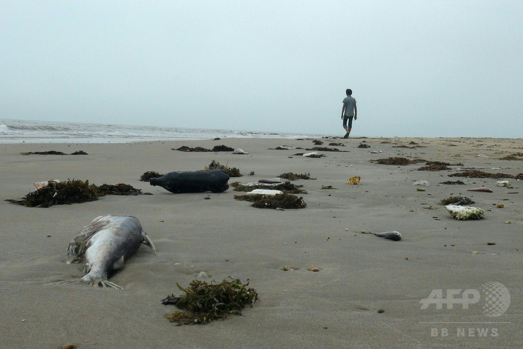 ベトナム中部で魚が大量死、製鉄所の廃水汚染か
