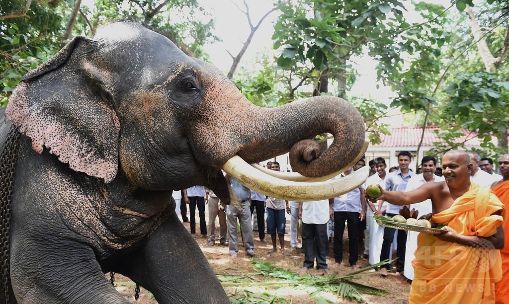 暴れる象から逃げる群衆が将棋倒しに、1人死亡 スリランカ