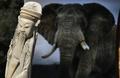 ゾウを密猟から救え! 米NYで象牙粉砕するイベント
