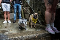 仲間のために走れ! 香港で捨て犬保護の資金集めイベント