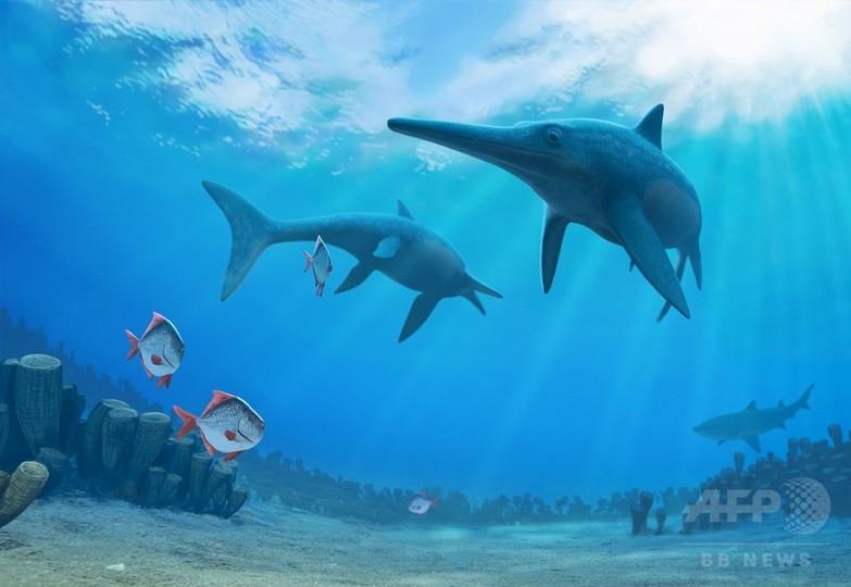 魚竜の絶滅、気候変動が原因か 研究