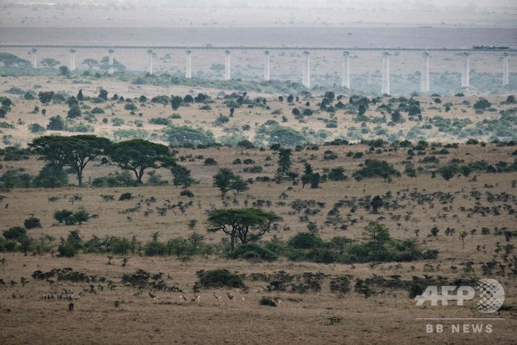 国立公園を横切る鉄道、高架建設着々と ケニア