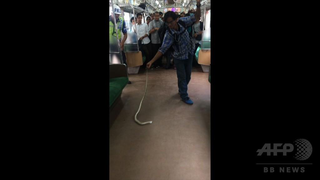 通勤電車内にヘビ! 素手でやっつけた男性に称賛 インドネシア