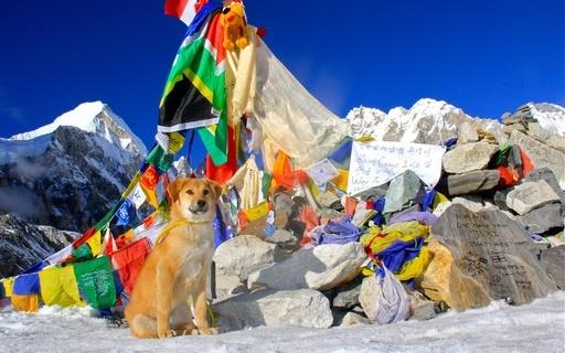 保護された野良犬がエベレストのベースキャンプに到着