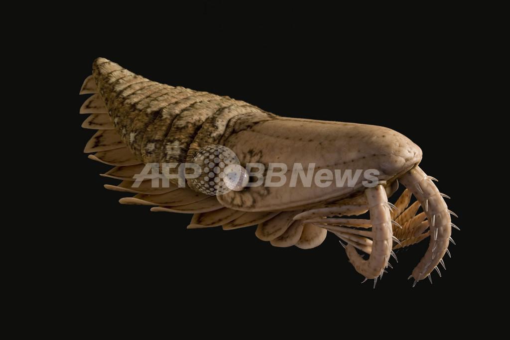 生物進化史を書き換えるアノマロカリス類の化石 ネイチャー