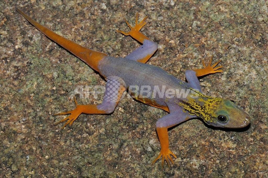 メコン川流域で新種続々、しかし絶滅の危機も深刻に WWF