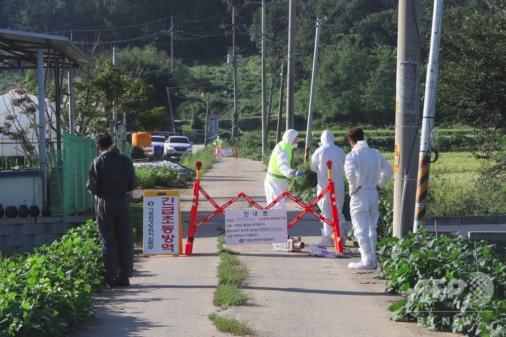 韓国でアフリカ豚コレラの発生確認 同国初