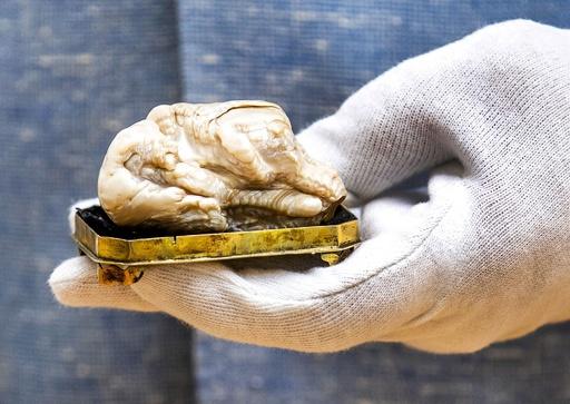 世界最大の淡水真珠「眠れる獅子」、競売へ オランダ
