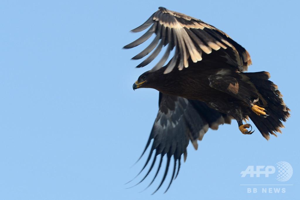 追跡中の渡り鳥が高額通信料国に…研究費底つき募金運動 ロシア