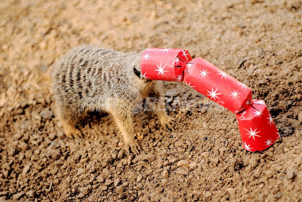 僕らにもクリスマスプレゼント!ロンドン動物園