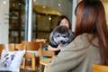 ペット歓迎の喫茶店オープン、杭州