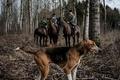 森を散歩中の妊婦、複数の犬にかまれて死亡 フランス