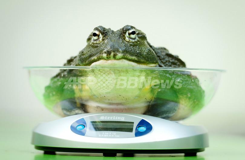 体重を量るのも一苦労?年に1度の身体測定 ロンドン動物園