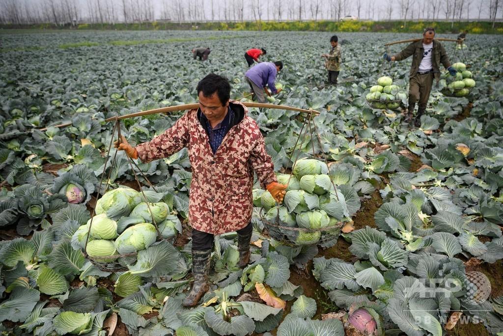 食品ロス削減に動く中国、実は「食料危機」に直面?