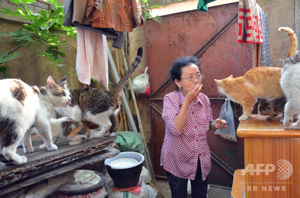 高齢の女性が27年で600匹の野良猫を養う 中国・山東省