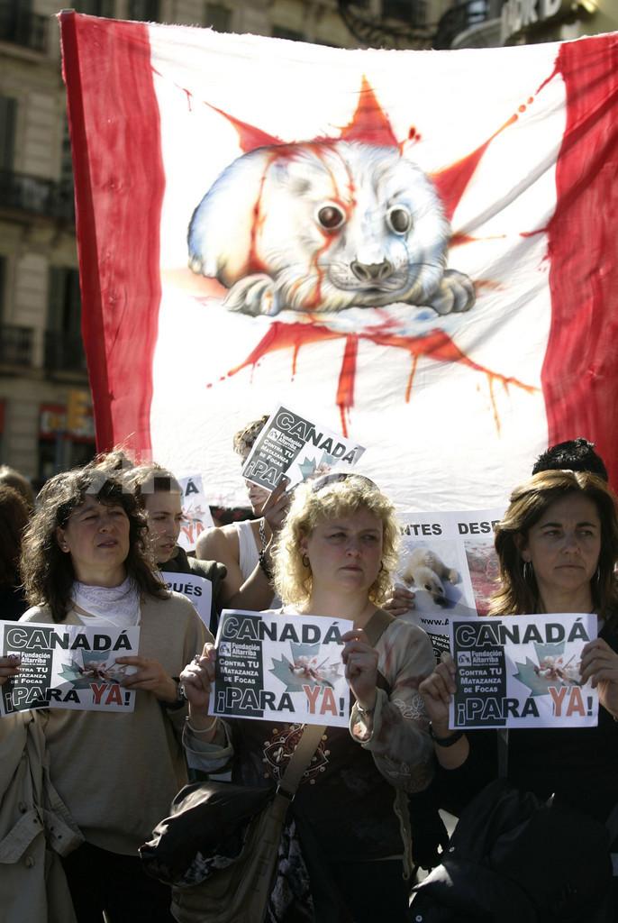 スペインでもタテゴトアザラシ狩猟に抗議デモ