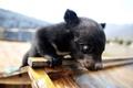 かわいい「子犬」…どんどん育って80キロに 雲南省