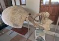 古代生物の化石、風食