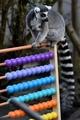 全部で何匹?ロンドン動物園で恒例の個体数調査