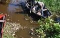 パラグアイの川で魚が大量死、当局が原因調査