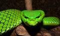 メコン川流域で過去10年間に発見された新種は1000種以上、WWF