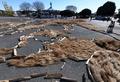 戌年祝う柴犬親子、巨大地上絵を展示中 ひたち海浜公園