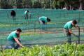 「大地の味」、カタツムリのキャビアで成功つかむ 伊新興企業