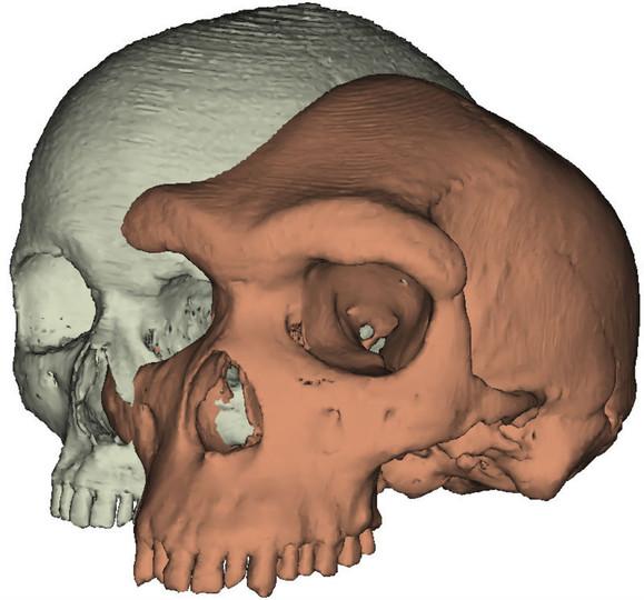 眉の動き、人類進化の助けに 英研究