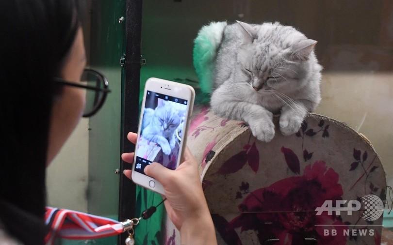 アモイの「猫街」へいらっしゃい