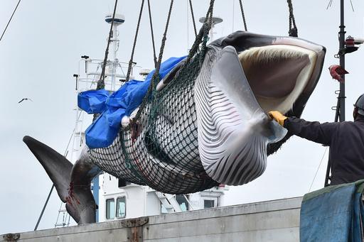 【今日の1枚】釧路港でクジラ水揚げ