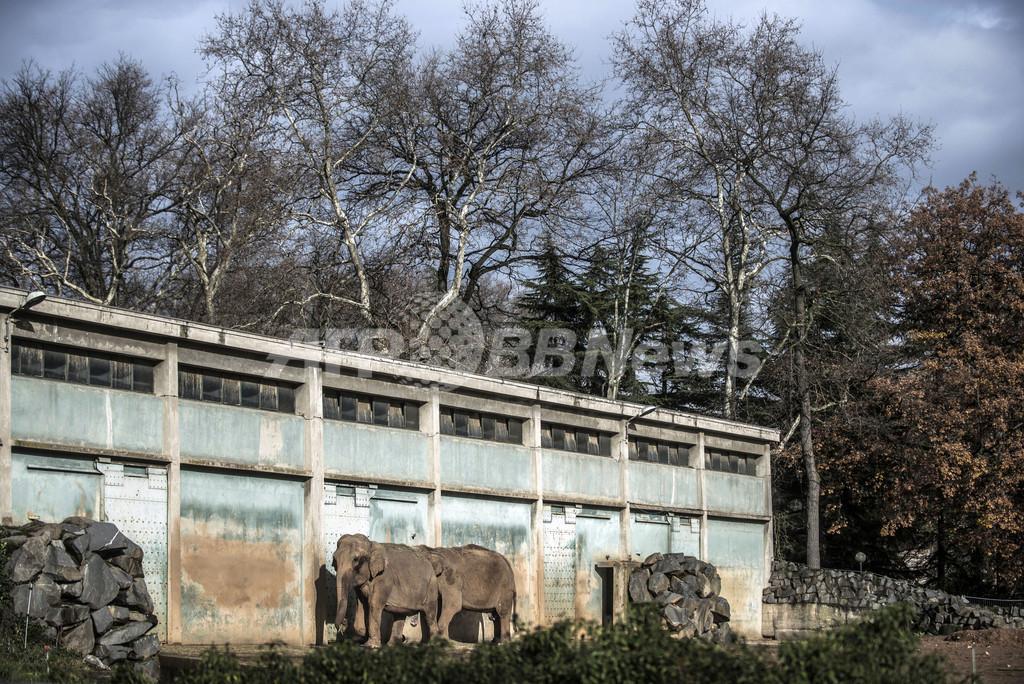 仏動物園のゾウ2頭、クリスマス「恩赦」で安楽死免れる
