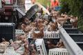 高速道路でニワトリ7000羽が脱走! 積み荷落下で オーストリア