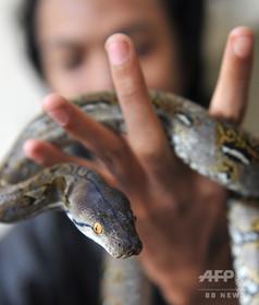 警官が容疑者にヘビ巻き付かせ自白強要 インドネシア・パプア州