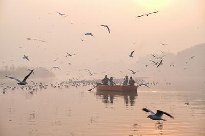 【今日の1枚】大気汚染の中、渡り鳥が飛来 インド