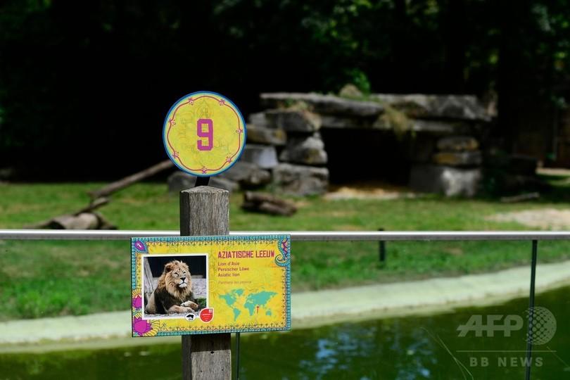 動物園でライオン逃走、射殺の警察に批判 ベルギー
