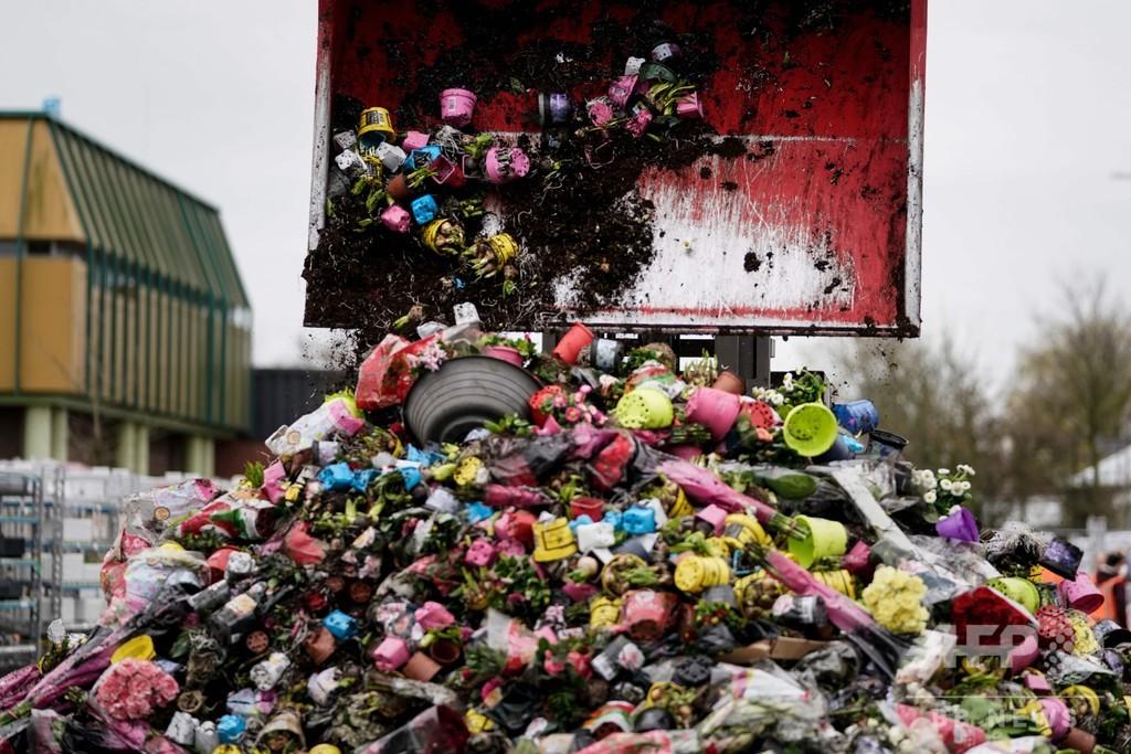 新型コロナでしぼむ花需要、廃棄迫られる生産者たち オランダ