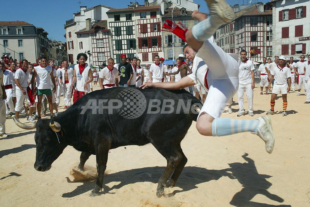 伝統のバイヨンヌ祭、牛追いの技競う