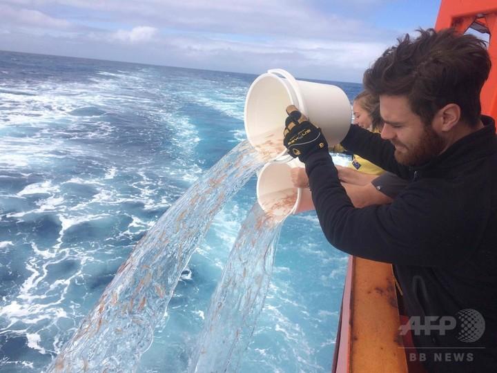 プラスチック海洋汚染、オキアミが奥の手となるか 豪研究