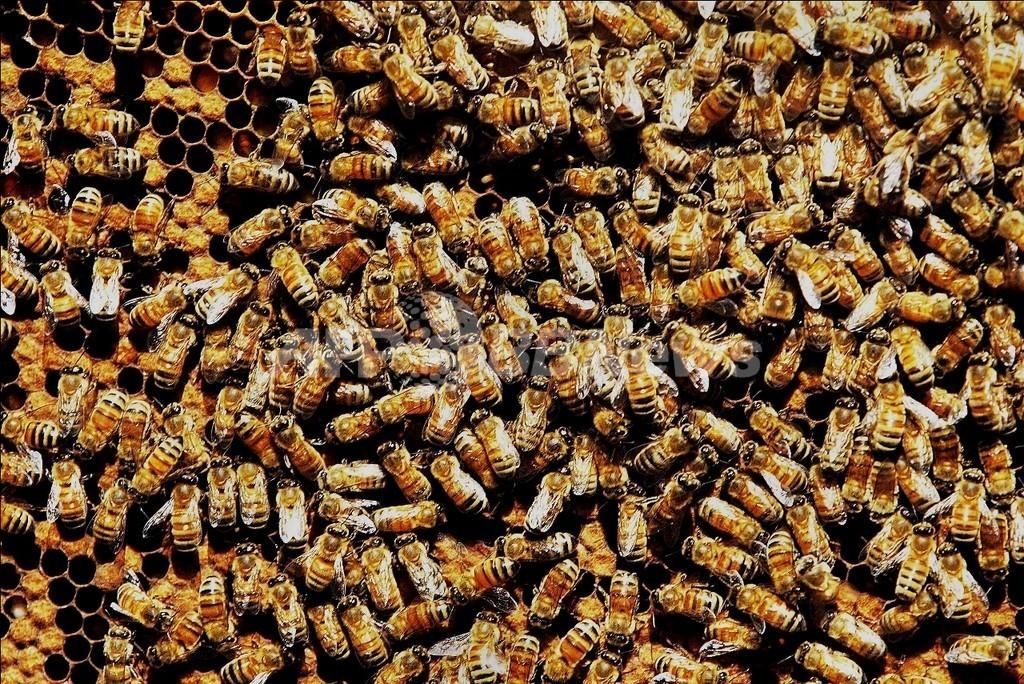 市民マラソンにハチの大群、30人病院へ 佐賀