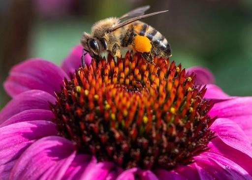 「昆虫50万種が絶滅の危機に」 科学者ら警告