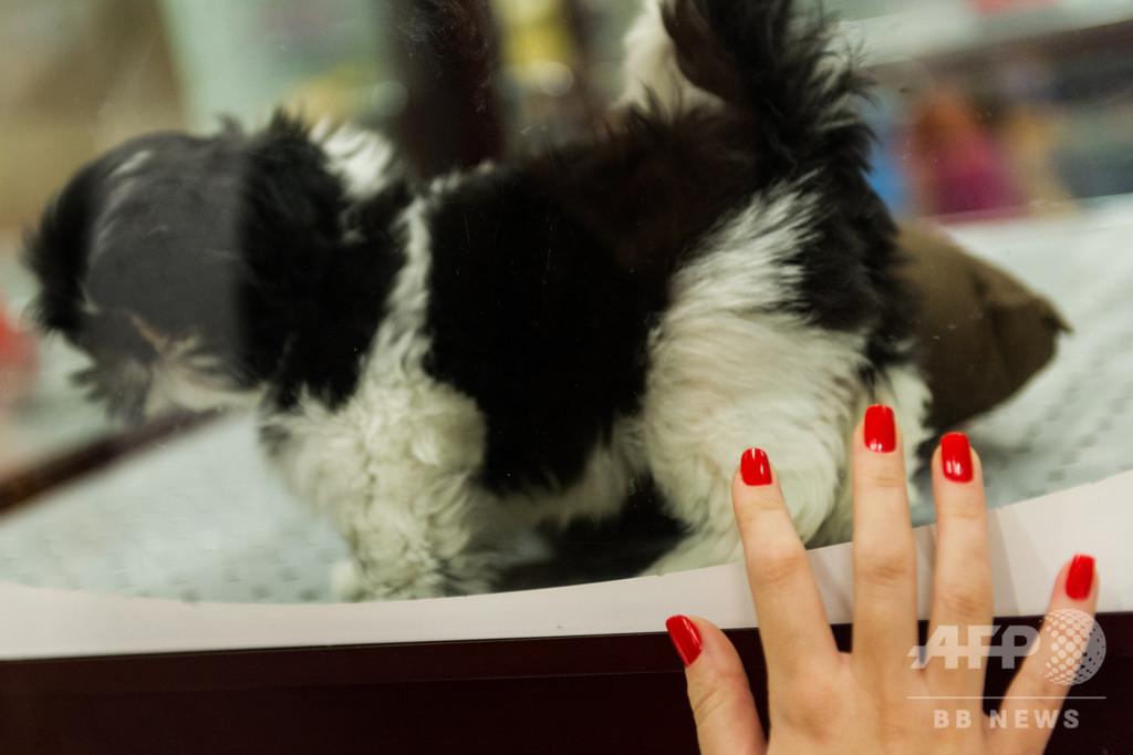 英、子犬や子猫の販売禁止へ 劣悪な飼育環境を問題視