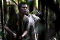 ジャングルから消えゆく鳥たち、地元住民で保護する動き インドネシア